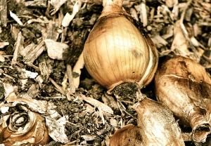bulbs-52666_1280